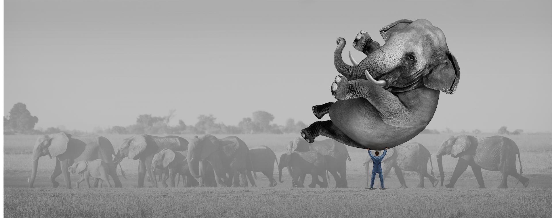elephantnew